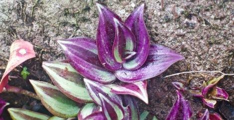 Pretty piton flower