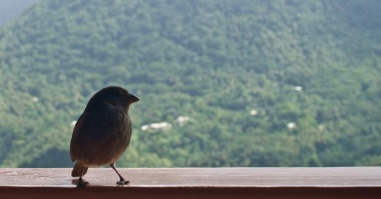 Hey birdie