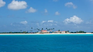 Blue Barbuda