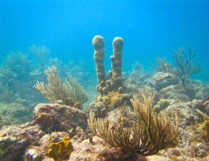 Reef exploring