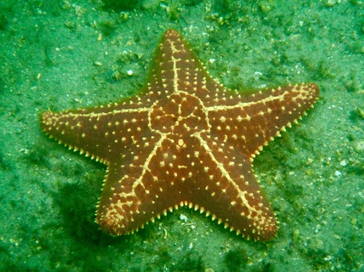 Starfish diaries p.4