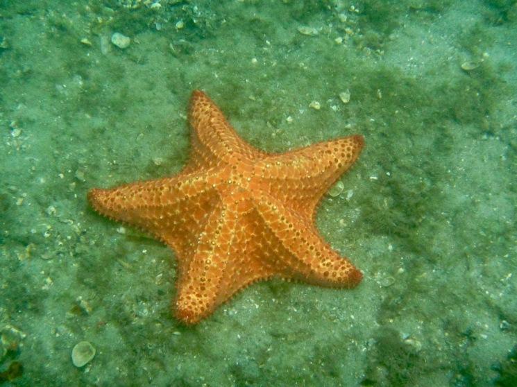 Starfish diaries p.3