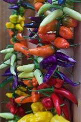 Colourful chilis