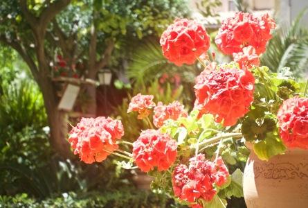 Pretty Palma