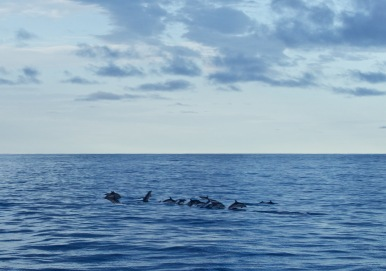 Dolphin hangout