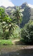 Walking between the palms