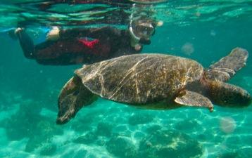 Turtle loving