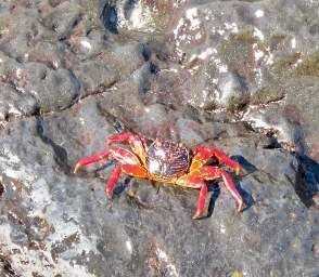 Colourful crabby